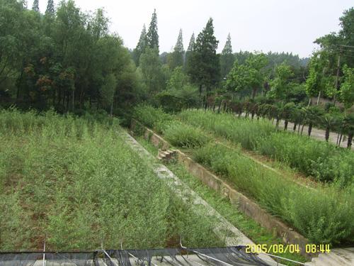柳树种质资源圃